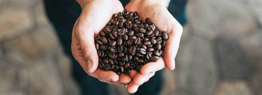 What are Arabica Beans? 5 Reasons Why Arabica is Special