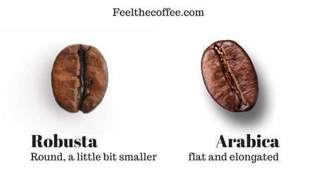Coffee Characteristics - Appearance